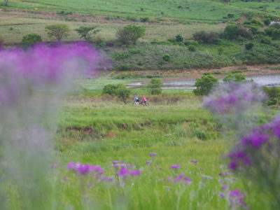 cycling2-kings-grant-accommodation-history-weddings-conferences-birding